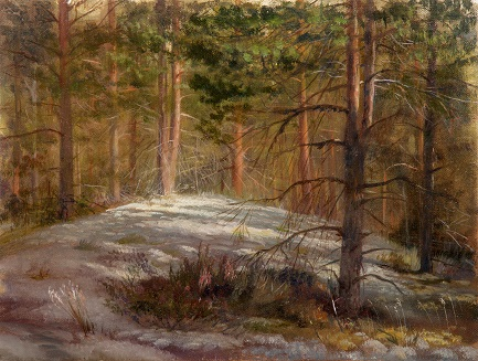 Солнышко в сосновом лесу
